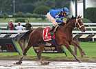 Alpha Turns in First Breeze for Travers
