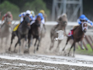 A bird passes in front of Alpha and the Jim Dandy field.