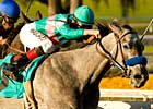 Alpha Kitten is Quick Cat in Santa Ynez