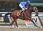 Alpha Breezes Five Furlongs at Belmont Park