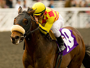 Alphie's Bet wins the 2010 Sham.