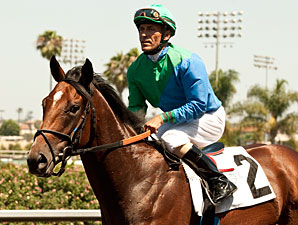 Alpine Luck wins the 2013 Hollywood Juvenile Championship.