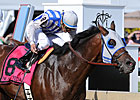 Alternation Edges Nehro in Pimlico Special