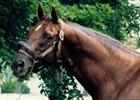 Longform: Alydar's Final Hours