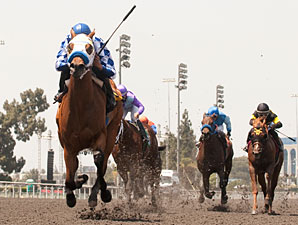 Hollywood Reports Slight Dip in Wagering