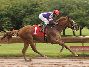 Amberjack wins the 2013 New York Derby.