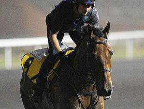 Ambitious Dragon prepping for the Dubai Duty Free.