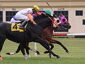 Amelia's Wild Ride wins the 2015 Pennsylvania Governor's Cup.