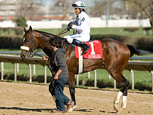 Grade III Winner American Lion Retired