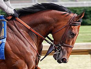 American Pharoah gallops at Churchill Downs May 24.