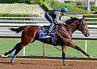 American Pharoah Out of BC Juvenile
