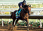 American Pharoah Perfect in Del Mar Work