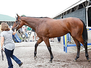 American Pharoah arrives back at Churchill Downs following his Preakness Win May 19.