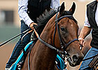NYRA Devising Strategy to Share 'Pharoah'