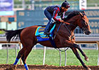 Crown Champ American Pharoah Returns to Work