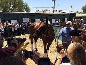 American Pharoah arrives at Santa Anita Park.