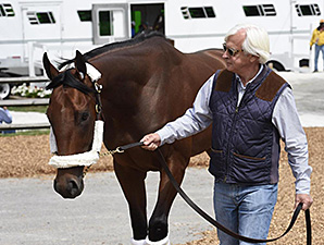 American Pharoah arrives at Pimlico Race Course.