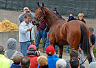 American Pharoah Forges Way to Zayat's Heart