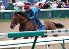American Pharoah Has Final Breeze for Belmont