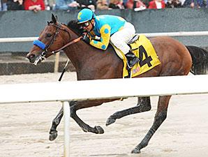 American Pharoah wins the 2015 Rebel Stakes.