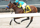 Arkansas Derby Next Step for American Pharoah