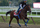 American Pharoah Takes Easy Gallop at Spa