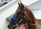 'Pharoah' Works in Preparation for BC Classic