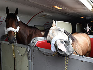 American Pharoah and Smokey the pony arrive at Belmont Park.