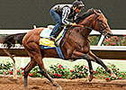 American Pharoah Has Final Work for Haskell