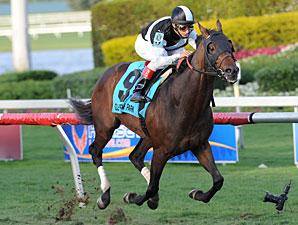 Amira's Prince wins the 2013 Mac Diarmida Stakes.
