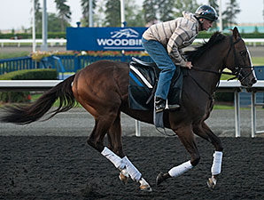 Ami's Holiday - Woodbine, August 16, 2014.