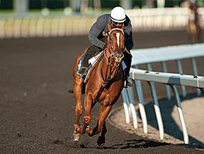 Ancil - Woodbine Race Course, 9/9/2014
