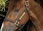 Andromeda's Hero to Stand at Dutchess Views Farm