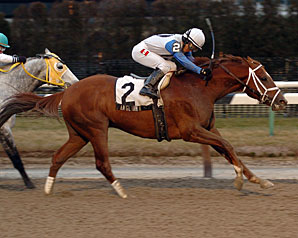 Angliana Tops 'Attire in Aqueduct