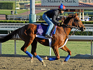 Animal Kingdom jogs at Santa Anita 10/28/2012.