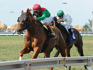 Animal Kingdom Again Breezes on Turf