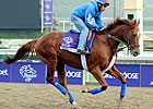 Animal Kingdom Targets Gulfstream Park Turf