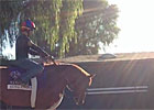 Animal Kingdom Walks at Santa Anita