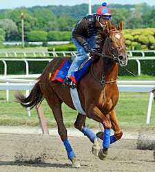 Animal Kingdom Arrives at Belmont Park