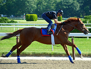 Animal Kingdom Zips Over Belmont Surface