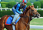 Animal Kingdom, 'Hounds' Early Belmont Faves