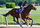 Animal Kingdom Has First Work at Fair Hill