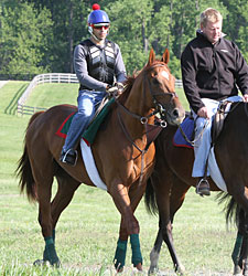 Animal Kingdom Jogs at Fair Hill