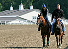 Animal Kingdom in Good Company at Fair Hill