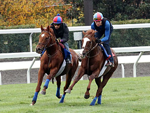 Animal Kingdom - Keeneland Work October 26, 2012