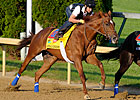 Haskin's Derby Report: An Animal on Dirt?