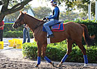 Animal Kingdom Breezes Six Furlongs