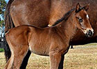 Animal Kingdom's First Foal Born in Australia