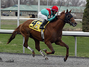 Animal Kingdom wins the 2011 Vinery Racing Spiral.