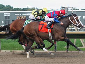 Ann's Smart Dancer wins the 2011 Dr. Teresa Garofalo Stakes.